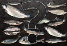 pesce senza nichel